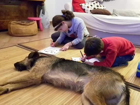 Perché diventare volontario del canile di Tortona  ?